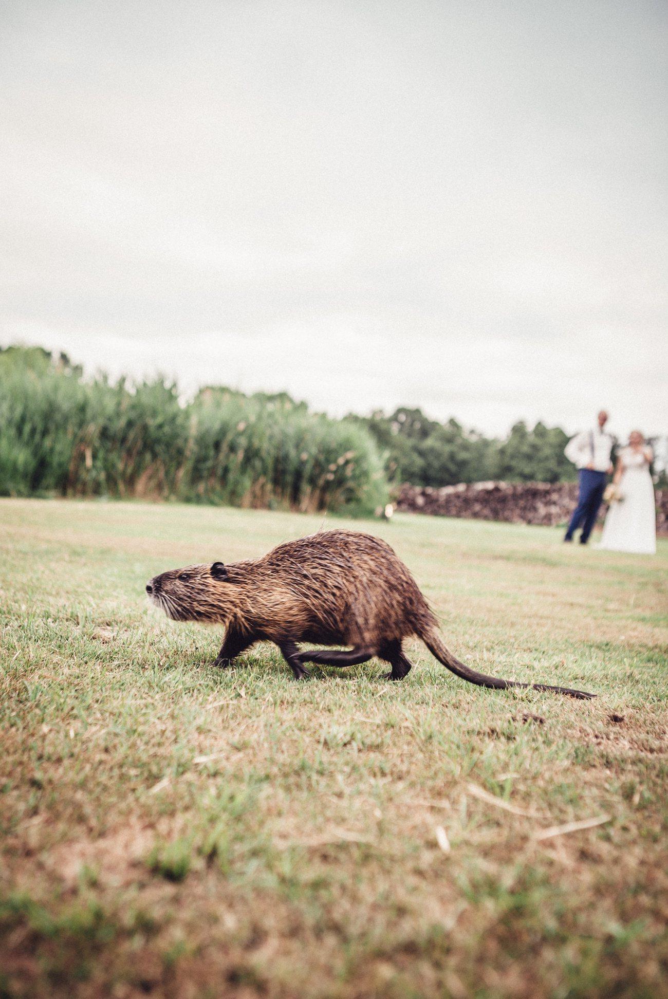 Spreewaldhochzeit_Hochzeitsfotograf_Schlepzig 91
